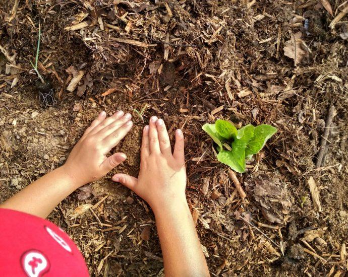 Le mani di un bambino accarezzano la terra preparando la messa a dimora di una piantina